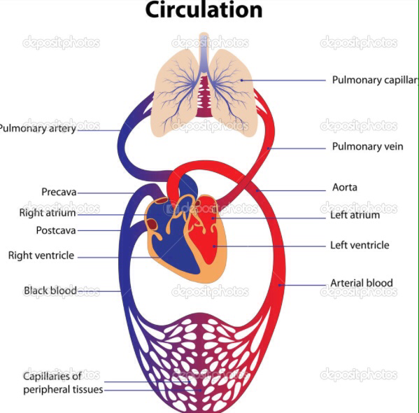 The circulatory system for Home circulation system